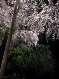 20150331_六義園04