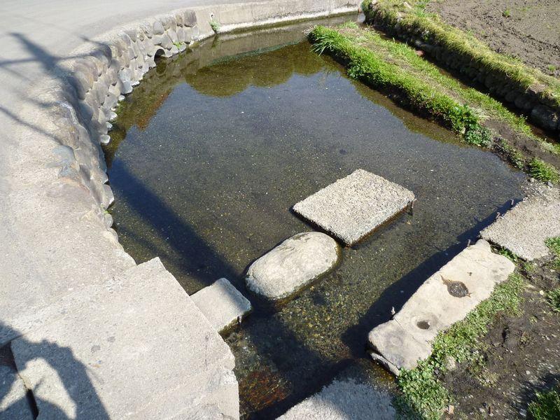 曾木の湧水池
