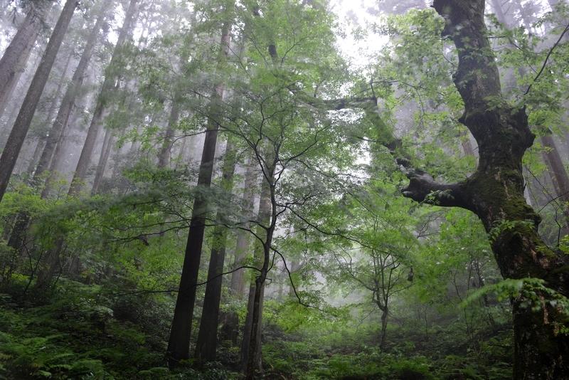 林 雨風-1