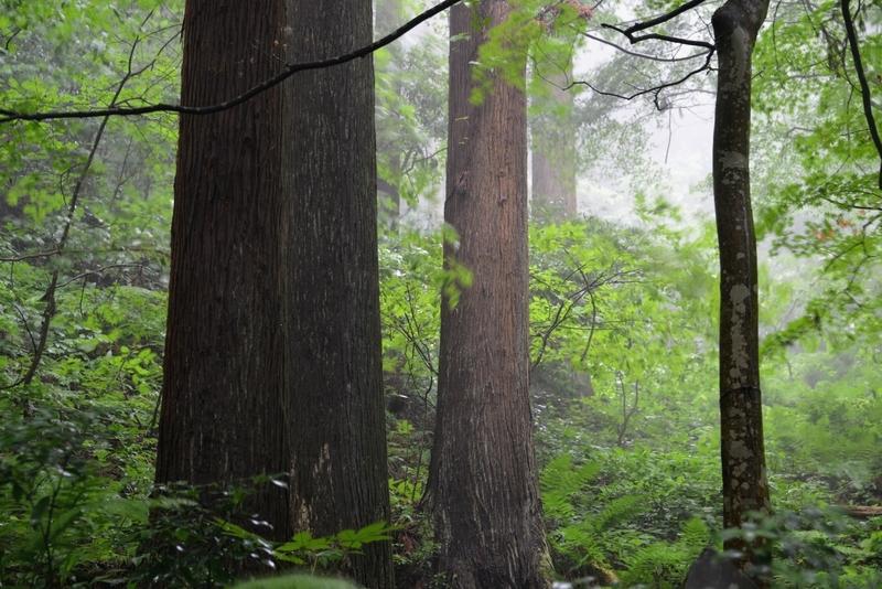 林 雨風-2