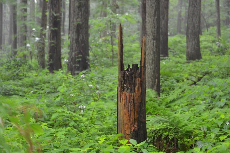 林 雨風-3