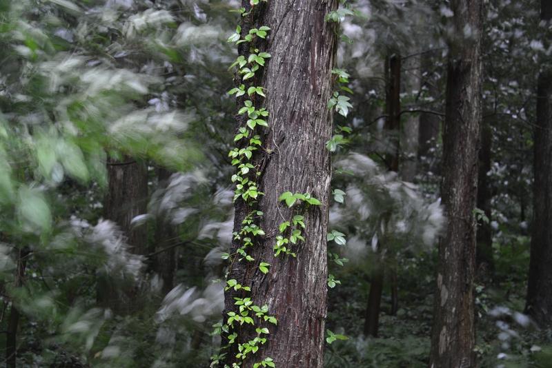 林 雨風-4