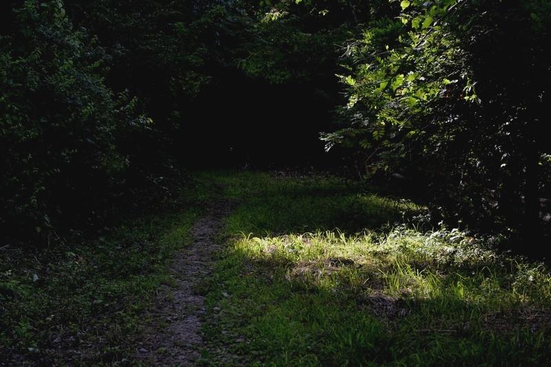 林 光射す-1