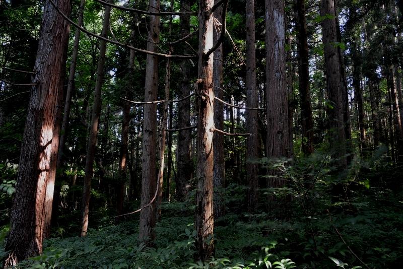 林 光射す-2