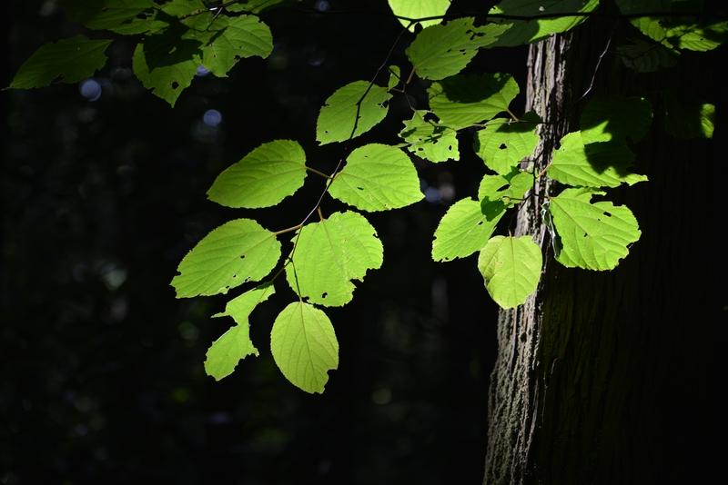 林 光射す-3