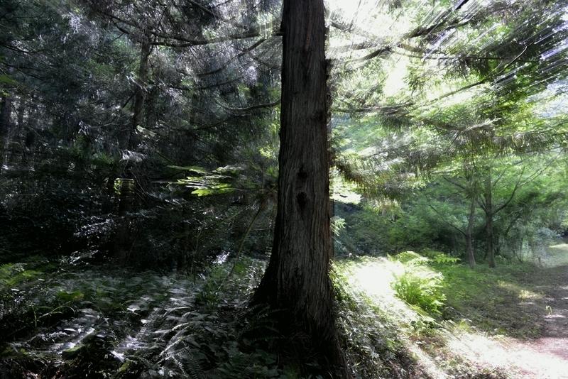 林 光射す-4