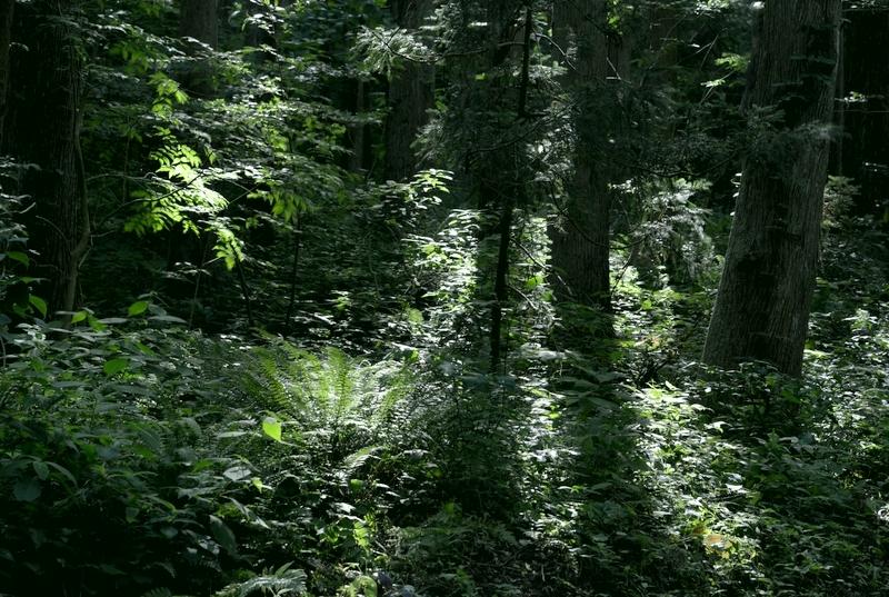 林 光射す-5
