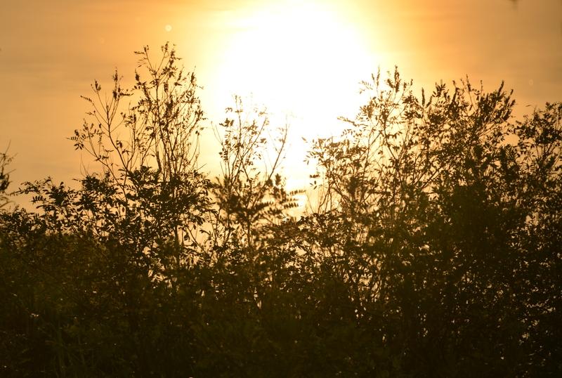 土手の夕陽-4
