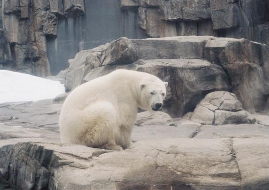 白熊さん3