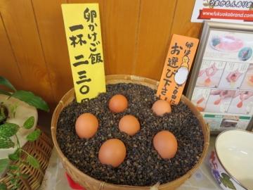 どの卵にしようかな