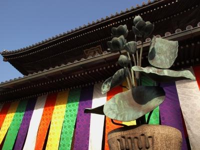 善通寺 colorful