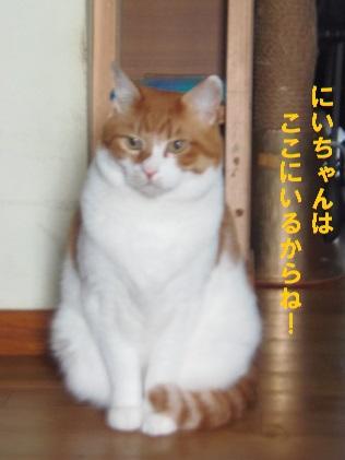 のらちゃん?5
