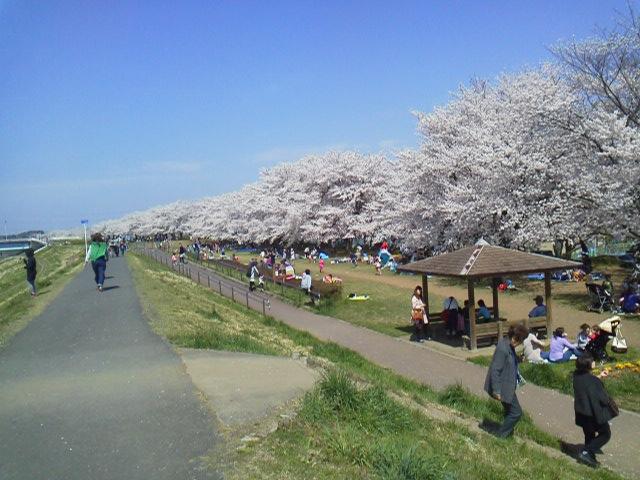 150402桜並木