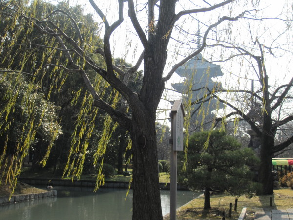 五重塔と道風ゆかりの柳