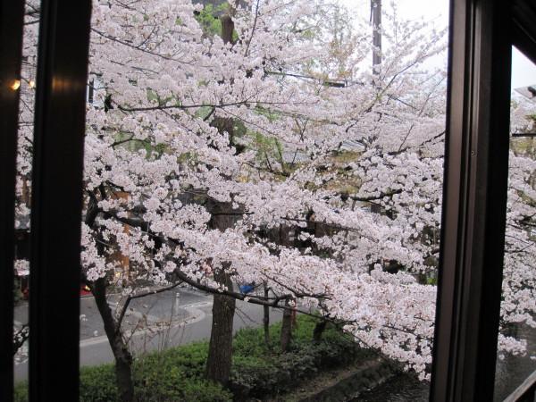 高瀬川 四季AIRからの眺め