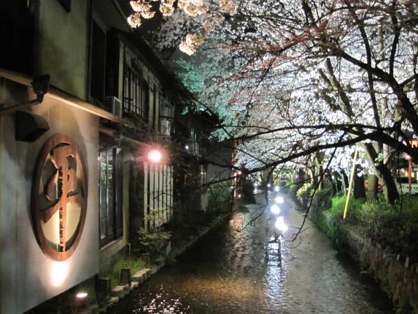 高瀬川沿いの夜桜