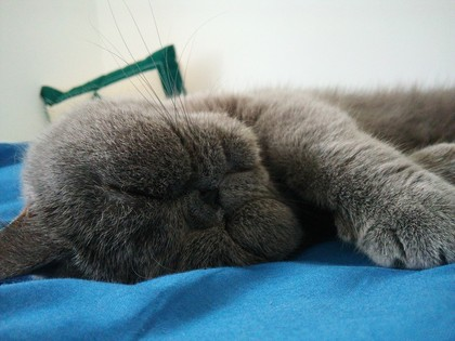 寝顔も最高