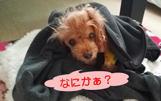 11_20150112154338733.jpg
