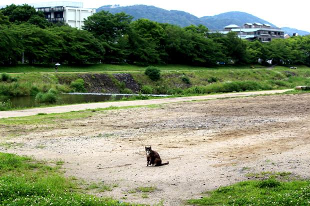 2015-0708-0334.jpg