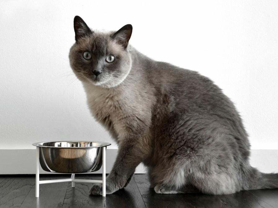 white_cat2.jpg