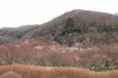 kana_20150222_13.jpg