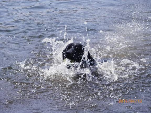 黒ラブ バラギ湖