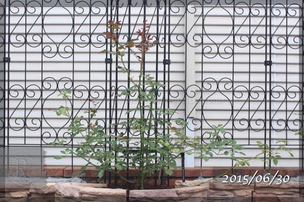 20150630 ジオルブライトンランブラー