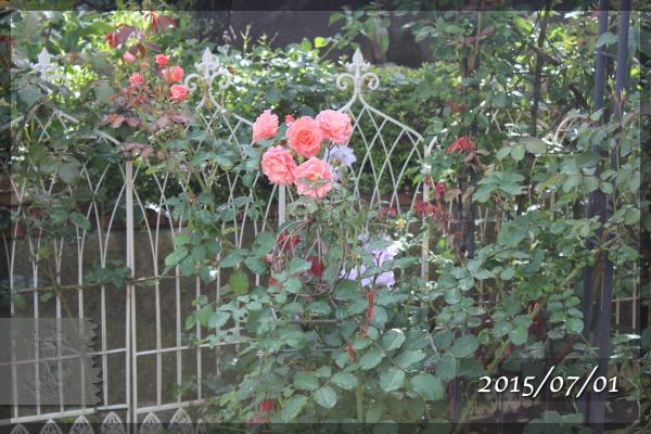 サンセットグロウ 20150701