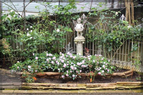 メインガーデン 花壇 八重咲きインパチェンス 20150709