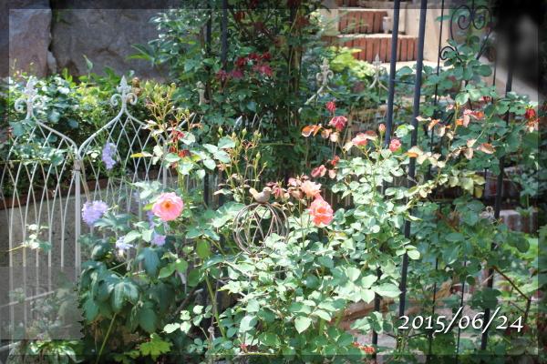 20150624 サンセットグロウ