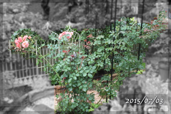 サンセットグロウ 20150703