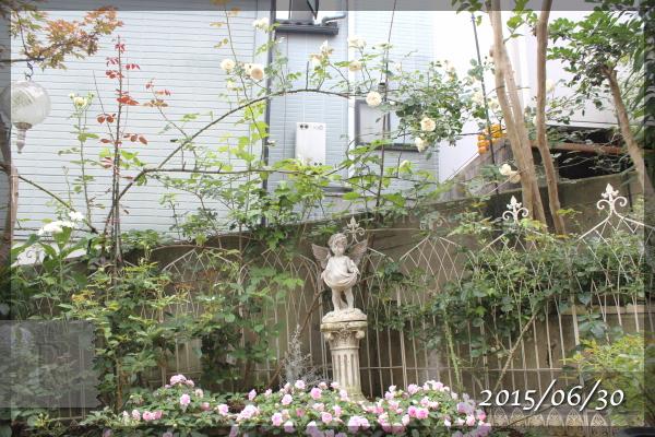 20150630 メインガーデン ソンブロイユ 八重咲きインパチェンス 花壇