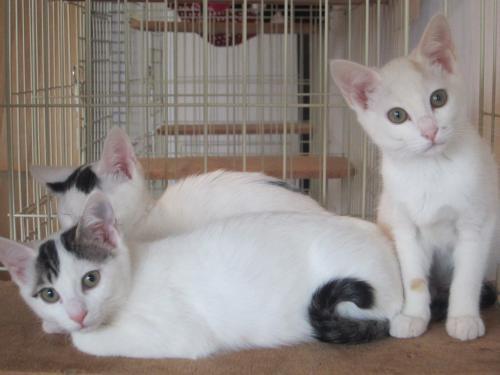 白猫系三匹