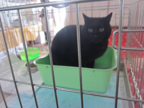 天売黒猫1