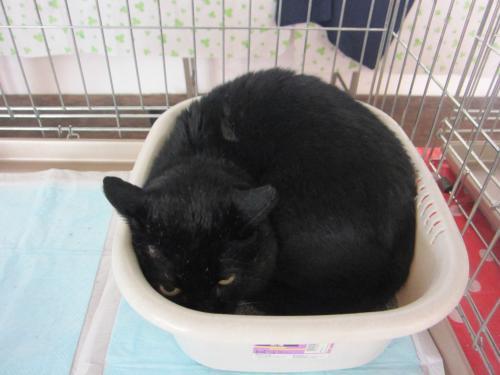 天売黒猫2
