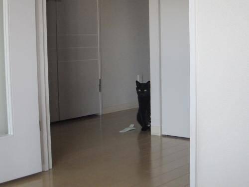 つぶちゃんドア