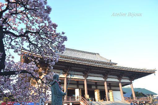 026-new--西新井大師本堂-寒桜