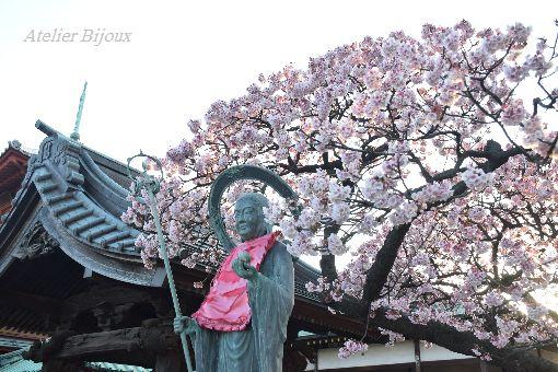 021-西新井大師-寒桜