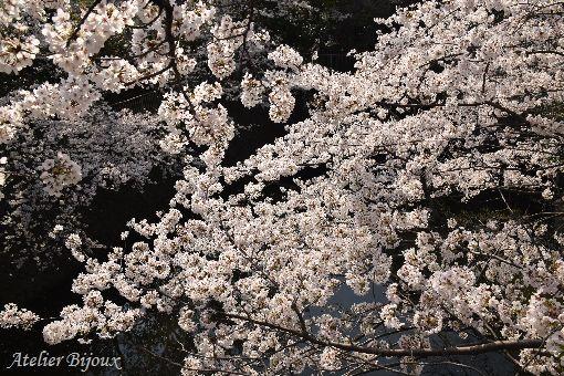 054-桜