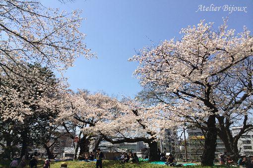 003-桜