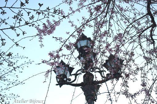 008-New-桜