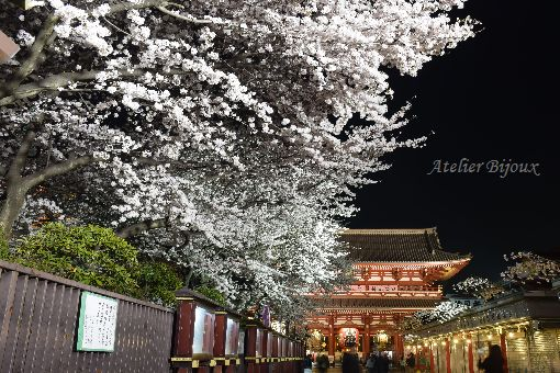 080-Blog-浅草寺桜