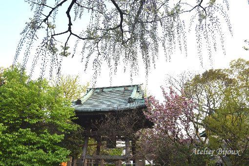 025-New-八重桜-藤