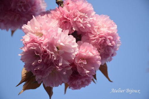 010-八重桜