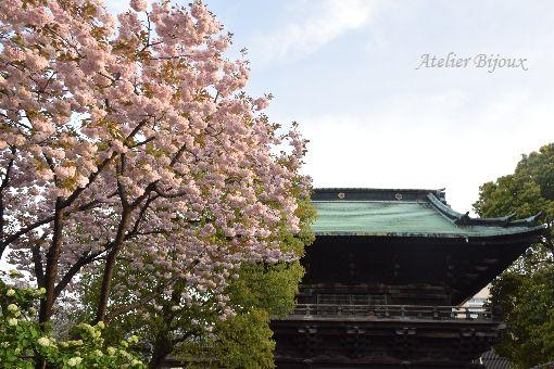 040-八重桜-大手毬