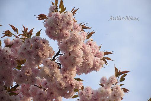 043-八重桜