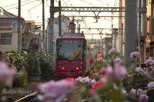 062-薔薇-都電