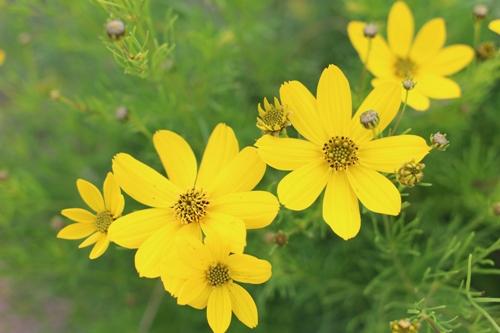 flower-20150616-01_20150616214150483.jpg