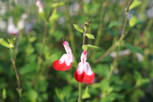 flower-20150701.jpg