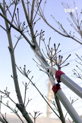 落葉樹をカットする